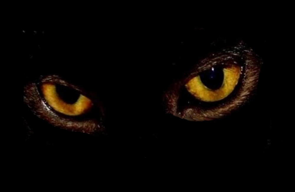 PHOTGRAPH OF MY BLACK KITTIE'S EYES
