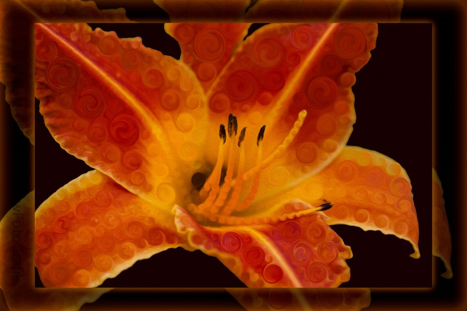 Closeup Wth A Vibrant Orange Lily Abstract Flower Omaste Witkowski owFotoGrafik.com