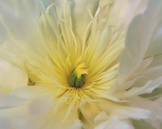 061914 flower