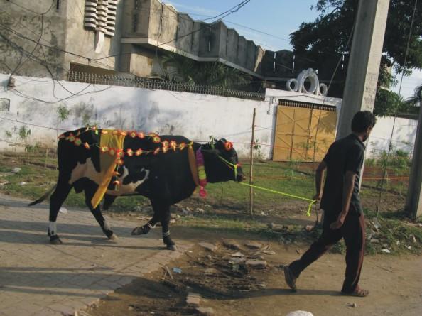 decor cow