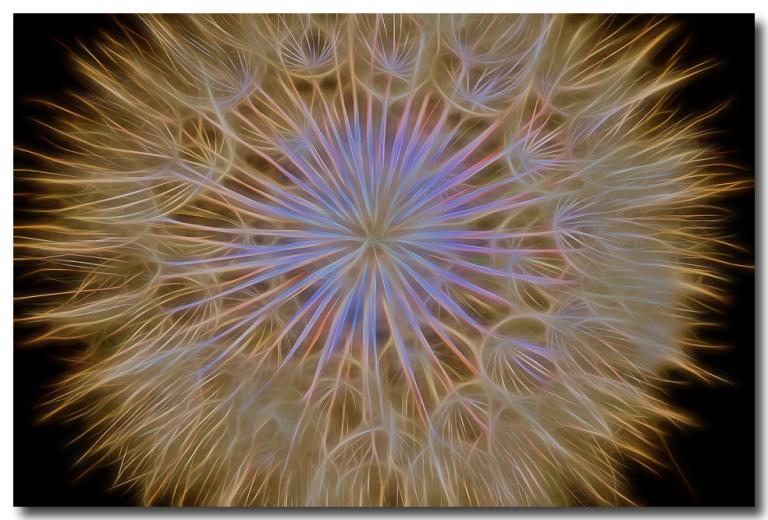 Psychedelic Dandelion Art Prints