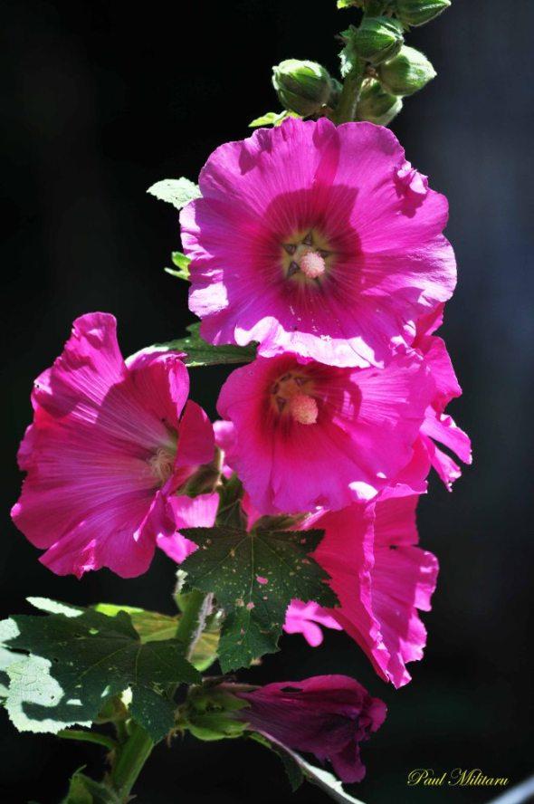 ornamental flowers 1