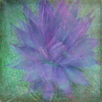 10-Majestic-Fine-Art-Texture02catus